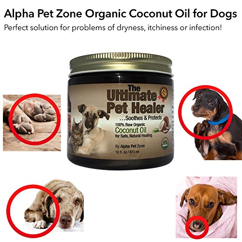 """Coconut oil for Dogs Diet Coconut oil has always been known to have the qualities and benefits of a """"SUPERFOOD."""" In fact, coconut oil helps in assisting with weight loss, while powerful antibacterial, antiviral and antifungal properties balance insulin and promote normal thyroid function in your dog."""