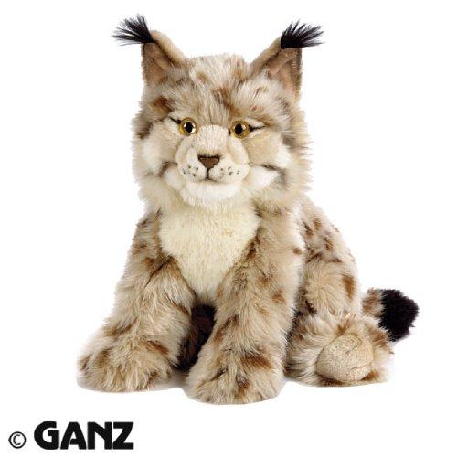 The Lynx Or Bobcat