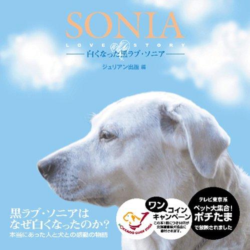 SONIA-白くなった黒ラブ・ソニア-