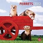 Ferrets 2012 Calendar