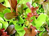 500+ Mesclun Lettuce Seeds- Salad Mix- 500+ Seeds