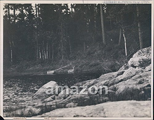 Vintage-Photo-of-Deer-wading-in-water-near-shore-AIB-436