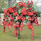 Real Bonsai Seed For Living Room Hanging Red Rose Seeds Bonsai Seeds (Pack Of 5) Bonsai Tree For Gift-by Creative Farmer