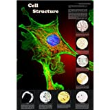 Understanding Cell Structure Poster