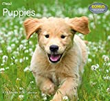 Puppies Wall Calendar (2015)