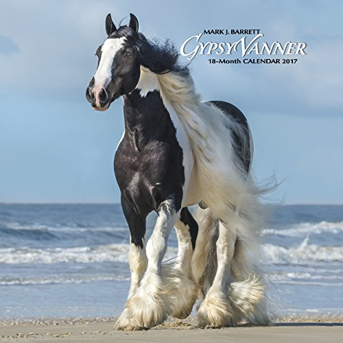 Gypsy Vanner Horse 2017 Wall Calendar