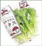 Dr.Vegetable 低カリウムレタス カリウム含有量1/5 75g×5袋