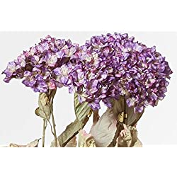 Hybrid Hydrangea, Crinkled, Purple, 32 Inches High, 12 Floral Sprays