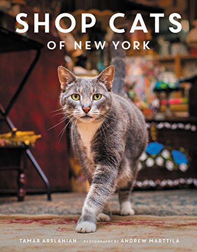 Buy Shop Cat Now!