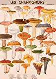 "Cavallini Decorative Paper - Mushrooms 20""x28"" Sheet"