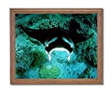 Manta Ray Ocean Sea Life Home Decor Wall Picture Oak Framed Art Print