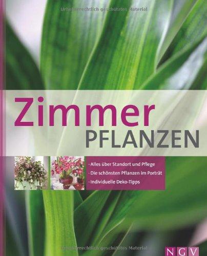 Zimmerpflanzen kaufen und richtig pflegen - Standort zimmerpflanzen ...