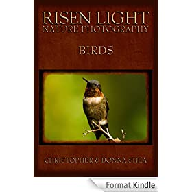 Risen Light Nature Photography of Birds
