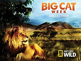 Big Cat Week Collection Season 1 [HD]