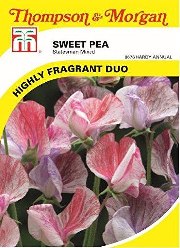 thompson-morgan-flowers-sweet-pea-statesman-mixed-25-seed
