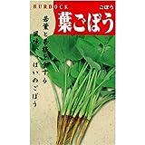 若い根と葉柄を料理で楽しむ! 葉ごぼう(一般種) 数量:10ml