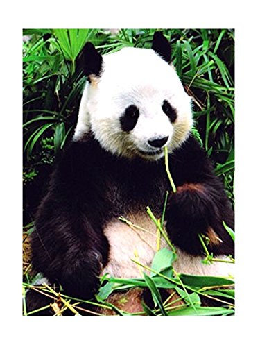 Panda Bear Arctic Trail Raschel Oversized Wildlife Plush Throw Blanket