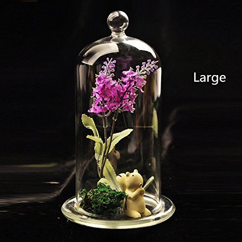 Bloss Hinterland Trading Air Plant Starfish and Seashell Glass Cloch Terrarium Kit