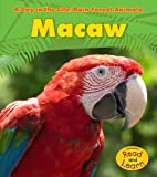 Macaw (A Day in the Life: Rain Forest Animals)