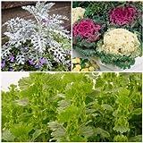 Biocarve Leafy Ornamental Plant kit-3 Packets