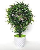 Miracle Retail Bonsai Wild Plant with Pot (28cm, Green)