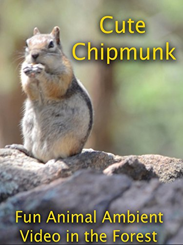 Cute Chipmunk Fun Ambient Video in the Forest