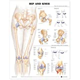 Hip and Knee Anatomical Chart (Tamaño: Heavy Paper)