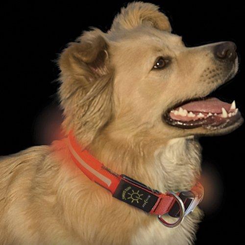 Nite-Dawg Orange Led Illuminated Dog Collar, Medium 13 To 18 Inches
