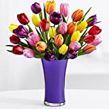 30 Multi-Colored Tulips - Flowers