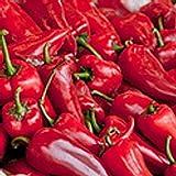 Pimiento Najerano - süßes Paprika aus Spanien