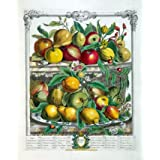 April, The Twelve Months of Fruits (V&A Custom Print)