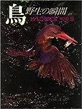 鳥―野生の瞬間