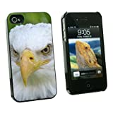 Bald Eagle Staring - Raptor Bird of Prey - Snap On Hard Protective Case for Apple iPhone 4 4S - Black