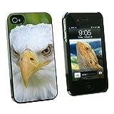 Bald Eagle Staring - Raptor Bird of Prey - Snap On Hard Protective Case for Apple iPhone 4 4S - Black