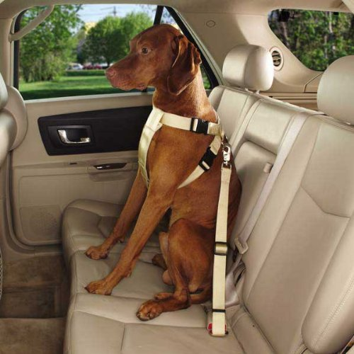 Guardian Gear Ride Right Classic Car Harnesses - Sturdy Nylon Harnesses for Dogs - Large, Black (Dog Car Harness Seat Belt compare prices)