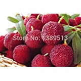 HOO PRODUCTS - 200 pcs/pack Arbutus unedo Strawberry Tree delicious chinese fruit seeds for healthy and home garden easy grow Brand New !