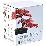 Plant Theatre Bonsai-Trio Kit - 3 unverwechselbare Bonsai-Bäume