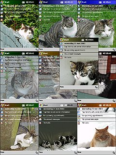 Cat themes Pack 2