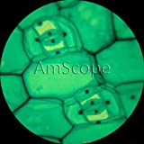 AmScope M100C-LED 40x-1000x All-Metal Student Cordless LED Field Biological Compound Microscope with All Optical Glass Lenses Toy Kids Play Children