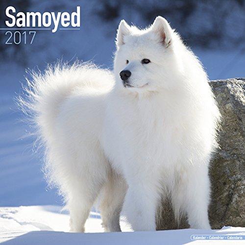 Samoyed Calendar 2017 - Dog Breed Calendars - 2016 - 2017 wall calendars - 16 Month by Avonside