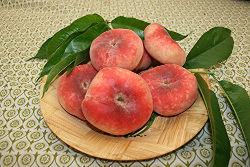 honey-peach-saturn-fruit-tree-for-pots-or-small-gardens