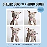 Shelter Dogs in a Photo Booth 2017 Wall Calendar
