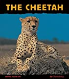 img - for The Cheetah: Fast as Lightning (Animal Close-Ups) book / textbook / text book