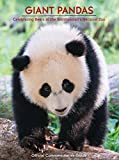 img - for Giant Pandas - Celebrating Bears at the National Zoo book / textbook / text book