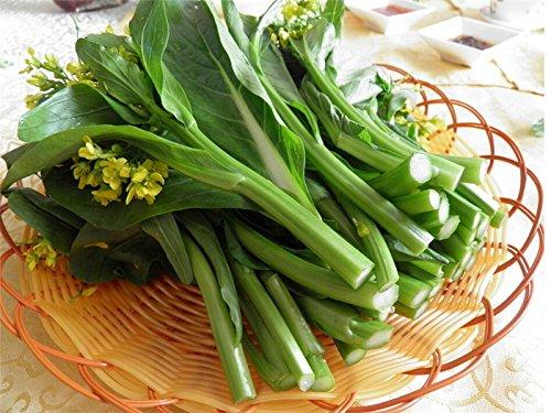 100-pc-semillas-suma-choy-col-china-semillas-vegetales-de-plantas-bonsai-verde-para-el-jardin-de-su-