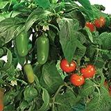 AeroGarden - Salsa Garden Seed Kit - Includes 2 Cherry Tomato 1 Jalapeno and 4 Plant Spacers - AERO601