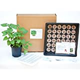 Medicinal Herb Garden Kit - Start growing yarrow, chamomile, echinacea, ashwaganda, catnip, lemon balm