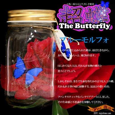 超蝶 ブルーモルフォ
