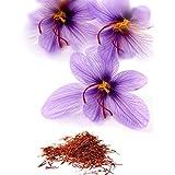 15 JUMBO Saffron Crocus Corms/Bulbs ~ FALL blooming ~ RARE SPICE ~ crocus sativus (Color: red, gold, purple, Tamaño: JUMBO)