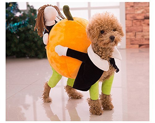 Funny Dog Carrying Pumpkin